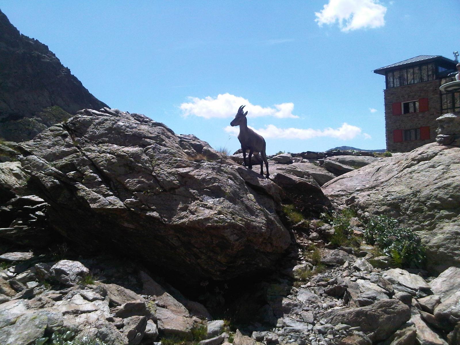 Mte. Argentera 08-11 August 2012 (Photo 11)