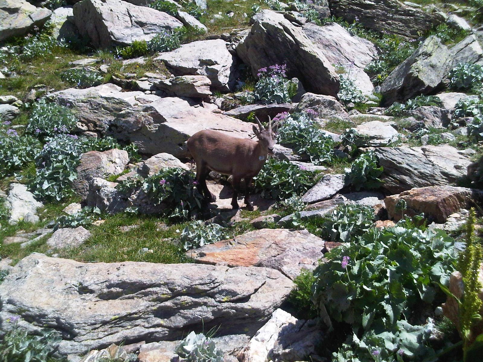 Mte. Argentera 08-11 August 2012 (Photo 12)