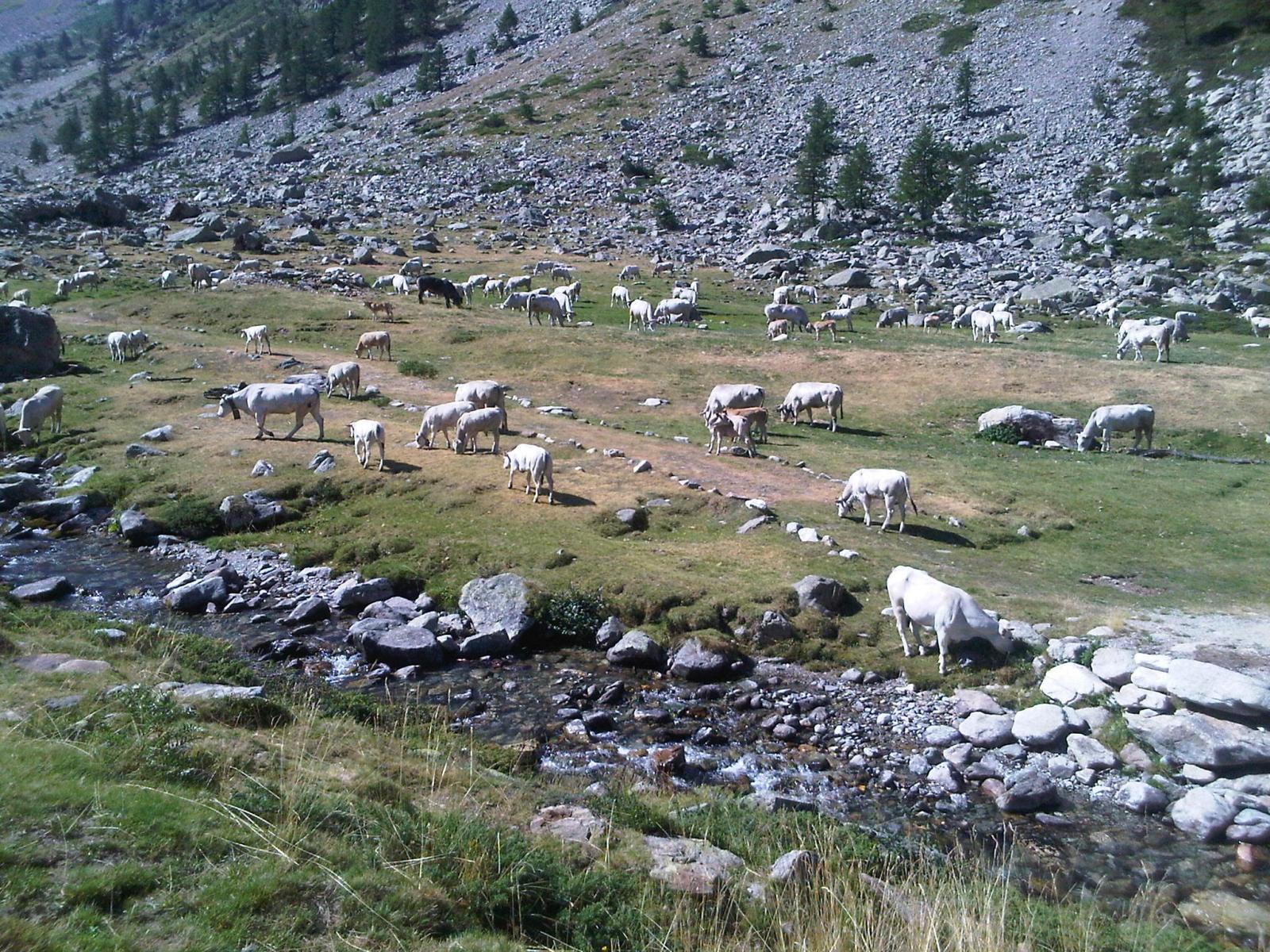 Mte. Argentera 08-11 August 2012 (Photo 5)